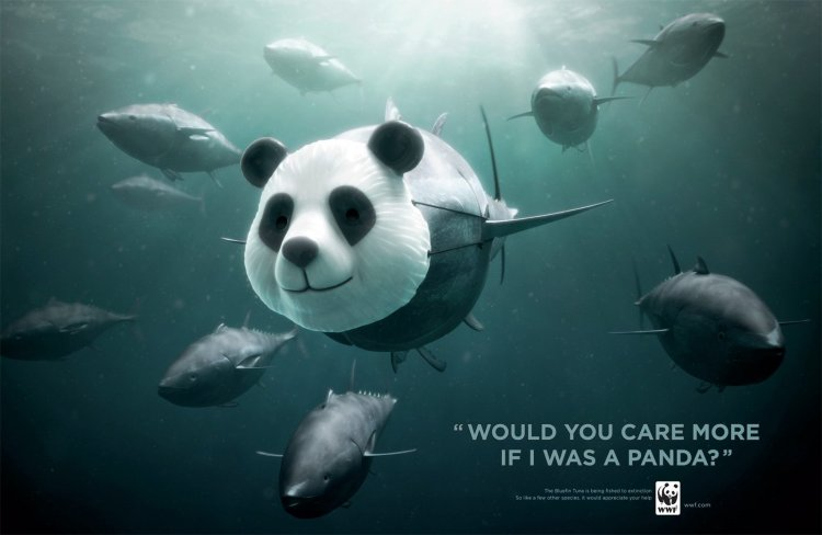 panda bluefin